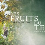 The Cherry Tree by Matthieu Boivineau